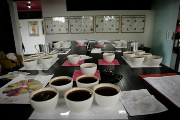 cupping-new-harvest